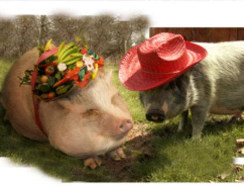 STORIES OF DELMAR & DAHLIA: THE ECO PIGS.